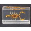 Scorpion sous résine vintage